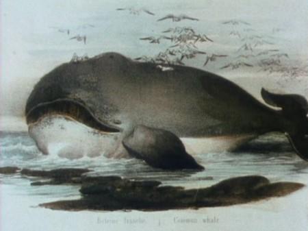 threecheersforthewhale
