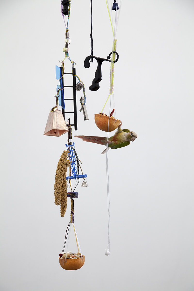 erin-jane-nelson-bird-toy